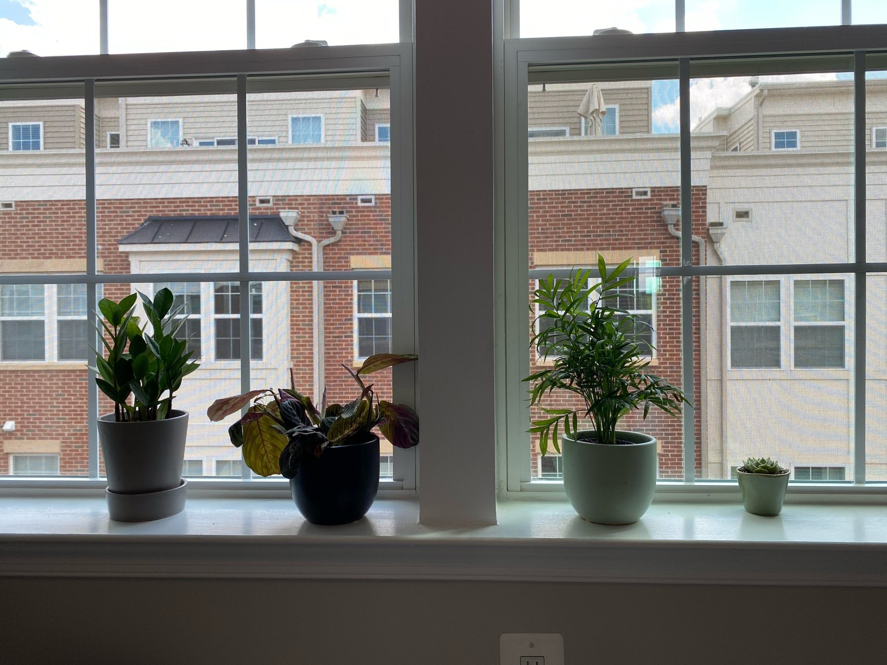Four potted plants in a window sill. From left to right, ZZ plant, prayer plant, parlor palm, and succulent