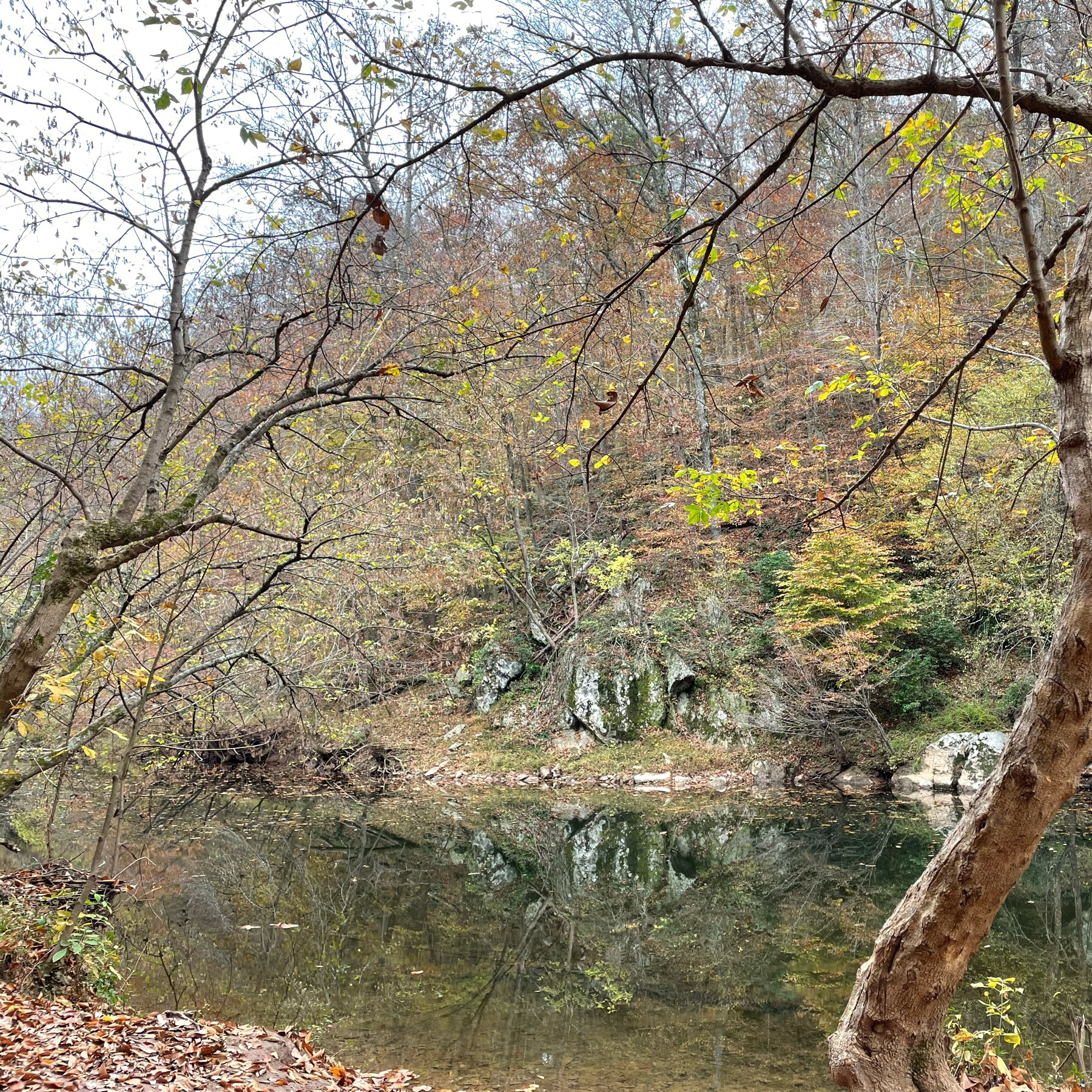 River among trees in the fall, although most leaves have fallen.