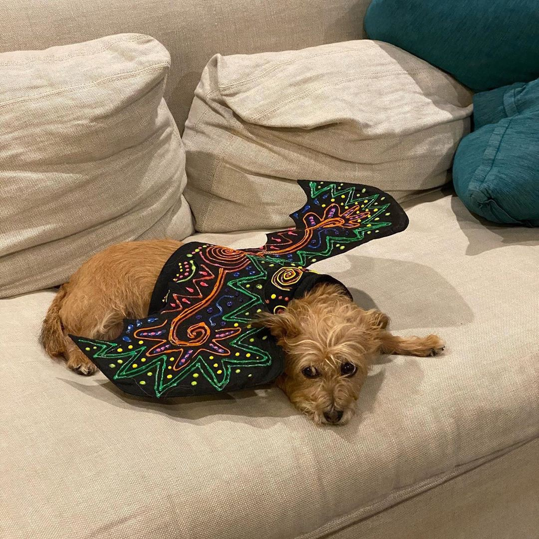 Brandy laying on a couch with painted wings.
