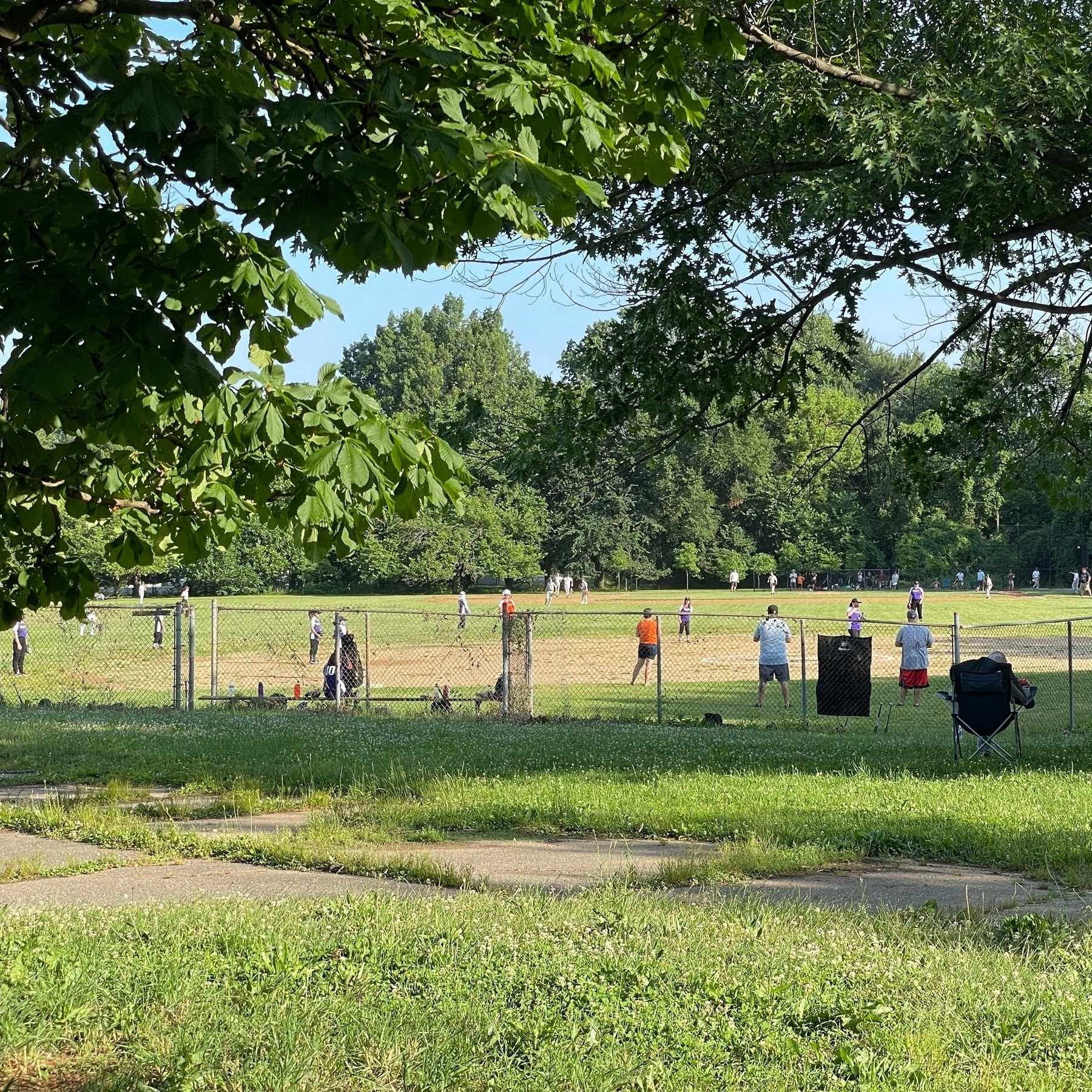 Little leaguers on the fields at Roosevelt Park.