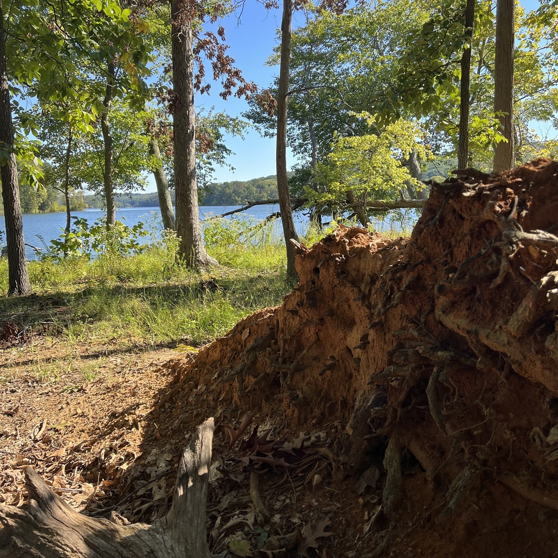 Uprooted tree with the reservoir behind it.