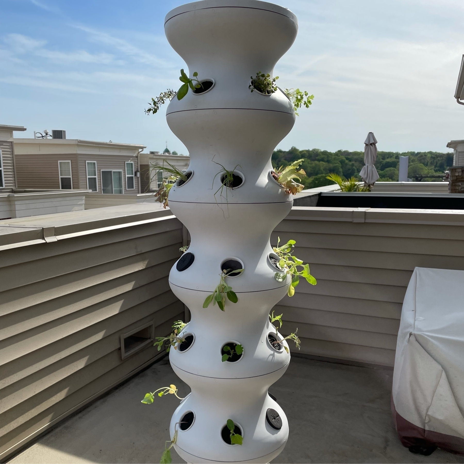 Lettuce Grow Farm stand on our roof deck.